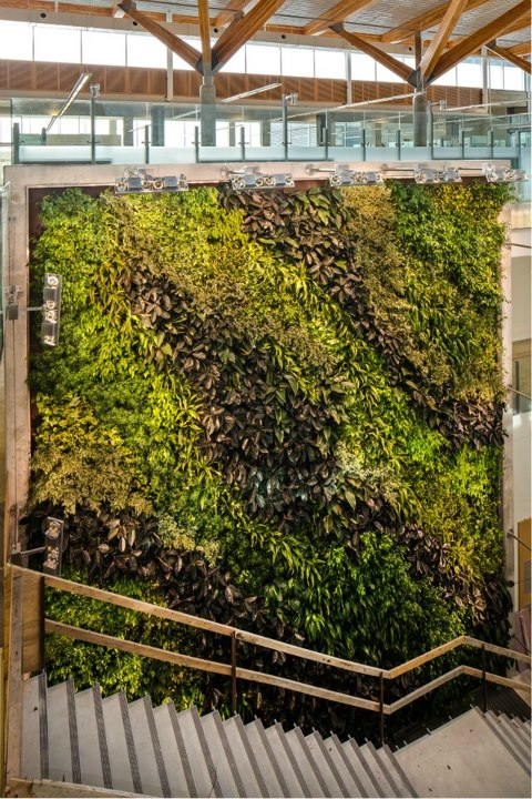 CEI living wall