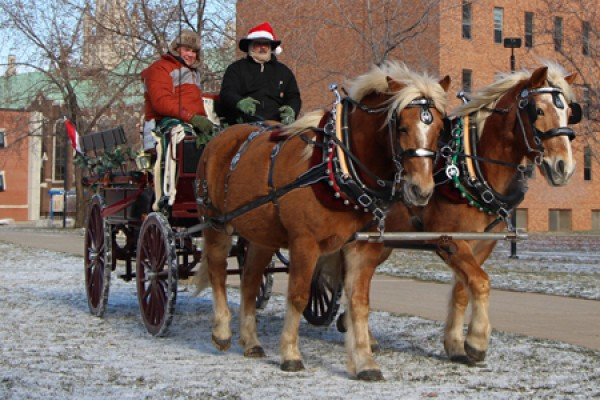 Horses pulling carriage on campus