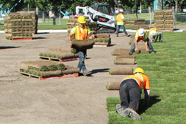 workers laying sod