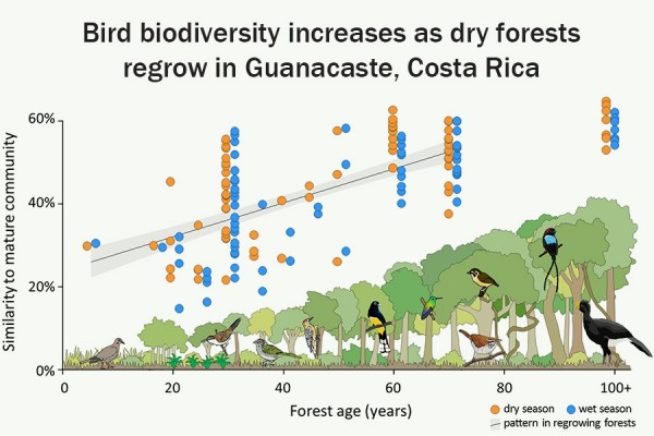 An infographic describes the increase in bird biodiversity as forests regrow in northwestern Costa Rica.