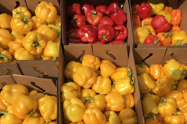 boxes of colourful bell peppers
