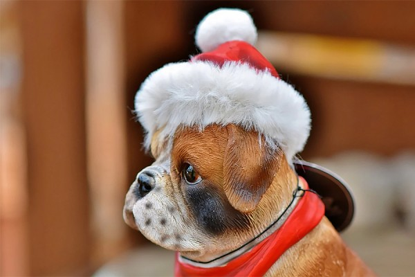 dog dressed in red Santa hat