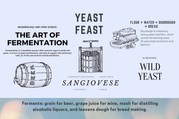 graphic with facts about yeast