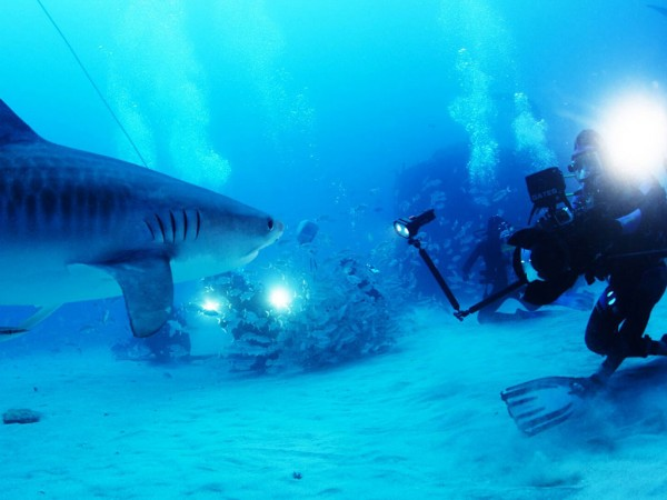Rob Stewart gets up close and personal with a tiger shark during the filming of Sharkwater Extinction. The film is produced and edited by UWindsor assistant professor Nick Hector.