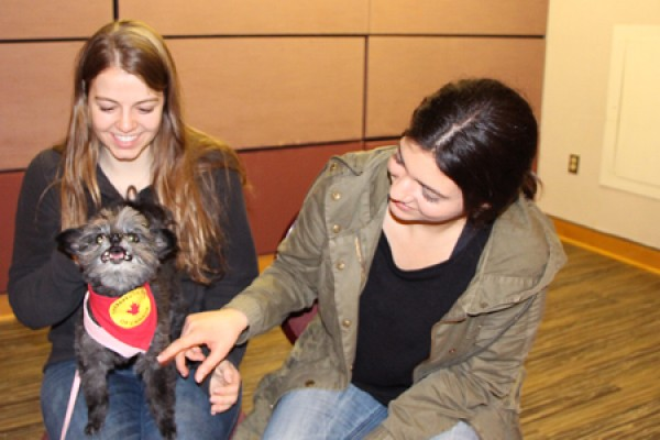 Students pet Maya, the friendly dog of Therapeutic Paws of Canada.