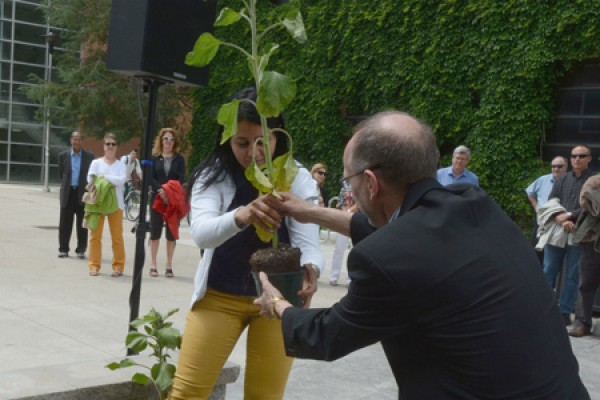 Nadia Hachem planting a sunflower with Bruce Tucker's help.