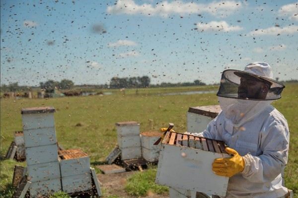 beekeeper with swarm