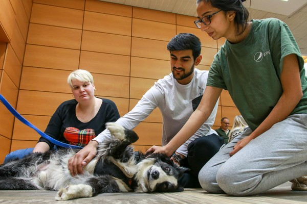 students pet a dog