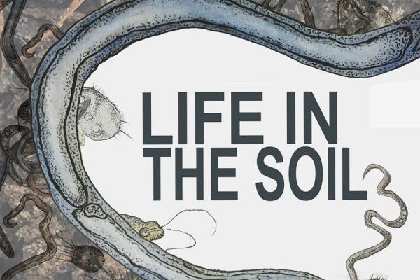 "graphic: ""Life in the Soil"""