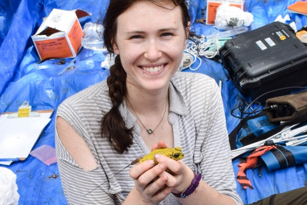 UWindsor biological sciences PhD student Katrina Switzer is working with 3D-printed yellow toads in the forests of Costa Rica to see how females choose among similarly coloured males.