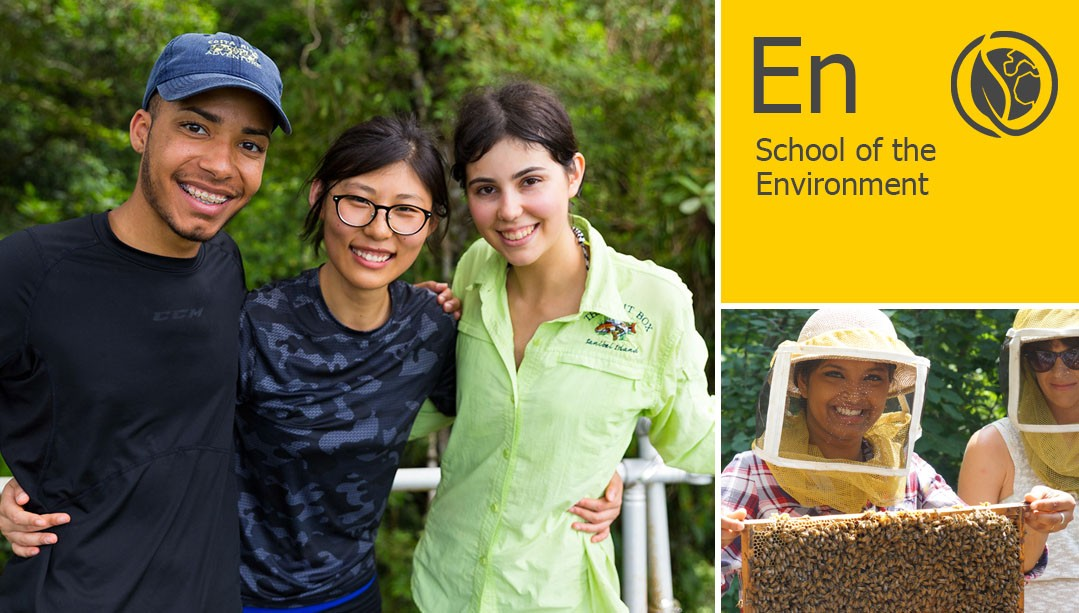 A collage of students, a beekeeper, and the School of the Environment text and icon
