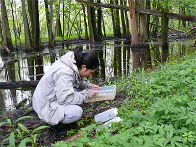 Great Lakes Institute for Environmental Research Student