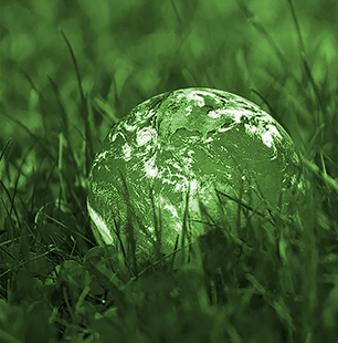 green globe nestled in grass