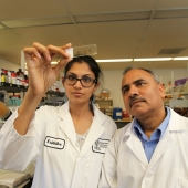 Krithika Muthukumaran and Dr. Siyaram Pandey shown in Dr. Pandey's lab.